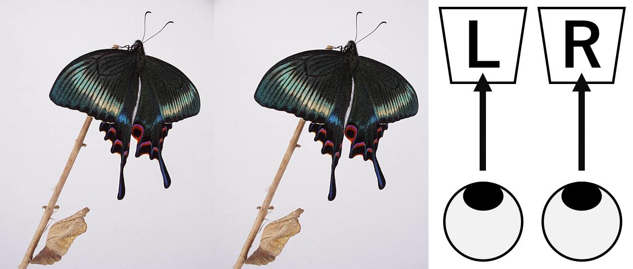 昆虫の立体写真